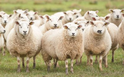 Don't be an Excellent Sheep
